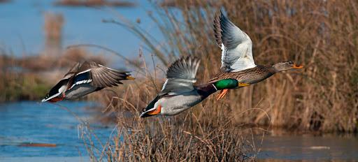 Corso Base Gratuito di OrnitologiaUrbana